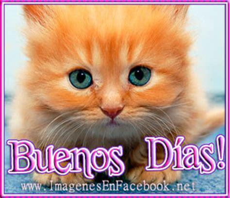 imagenes de gatitos tiernos de buenos dias buenos dias gato naranja imagenes con frases fotos y