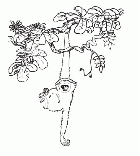 jungle vines coloring pages image gallery jungle plants drawings