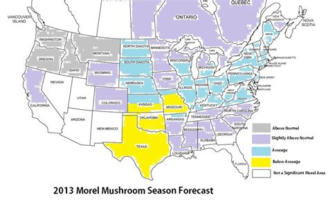 morel map 25 best ideas about morel map on edible mushrooms