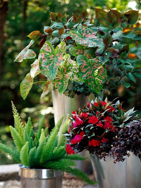 container garden recipes for shade gardens shade plants