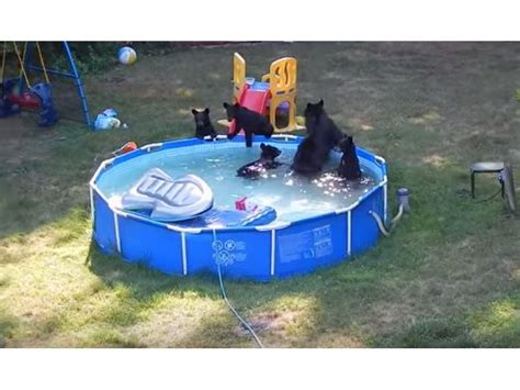 and cubs go swimming in backyard pool