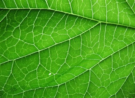 green veins wallpaper pack by ythor image gallery hi res leaf