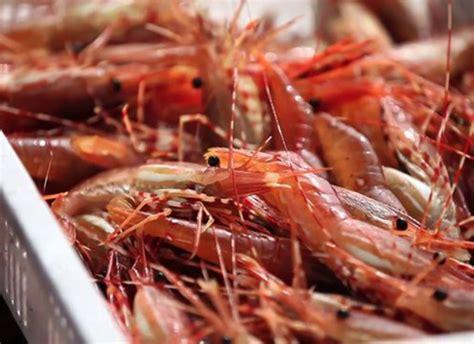 bc spot prawns lepp farm market
