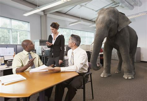 what does the elephant in the room ok literal metaphor stock photos we get it photos huffpost