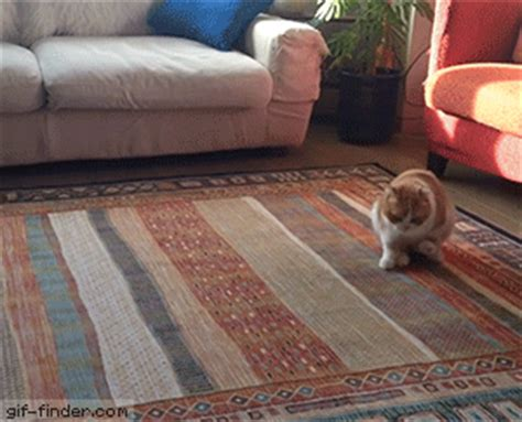 Dog Dragging On Carpet Gif   Carpet Vidalondon