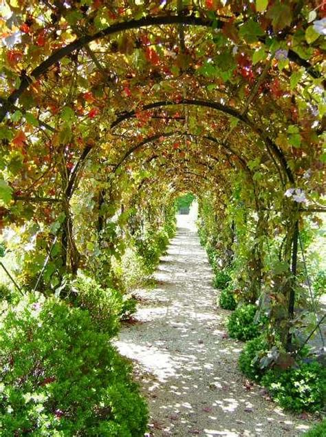Garden Arch For Grapes 12 Best Grapevine Trellis Ideas Images On