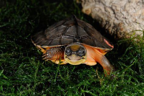 Puzzle Pantai Thailand Bisa Menyala Dalam Gelap dunia selamatkan kura kura indonesia masih jual telur penyu mongabay co id