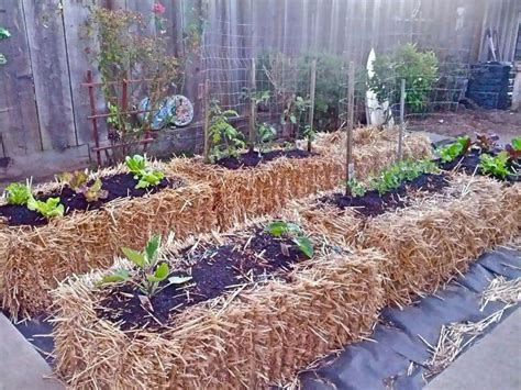 Straw Bale Gardening Great Gardening Pinterest Straw Bale Vegetable Garden