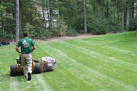 winter lawn care winter lawn care in charlotte winterizing your grass