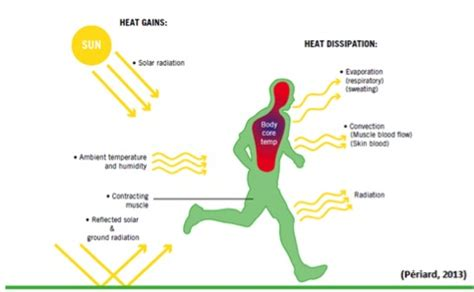 temperatura interna corporea aumento de la temperatura y ejercicio power explosive