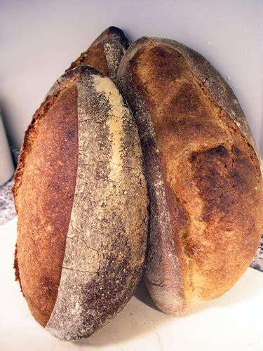 50 hydration sourdough starter 9 7 10 5 hour au levain batards the fresh loaf