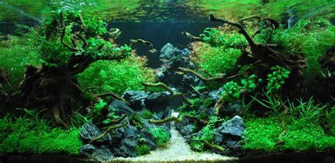favorit   iaplc aquascape aquarium