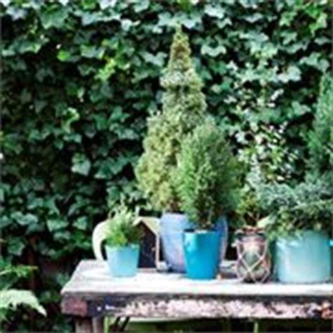 piante da terrazzo esposto a nord piante da terrazzo sempreverdi