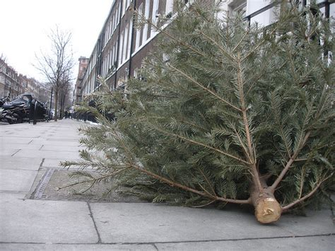 where to recycle your christmas tree in vancouver surrey