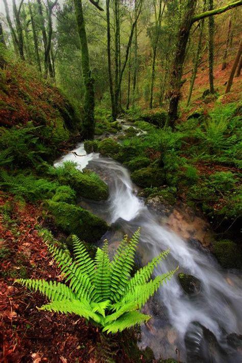 monte aloia nature park location parque natural del monte aloia en tui spain waterfalls