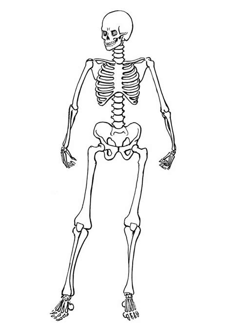 dibujo de muerte con capucha para colorear dibujos net dibujos con animacion esqueletos de dibujos animados