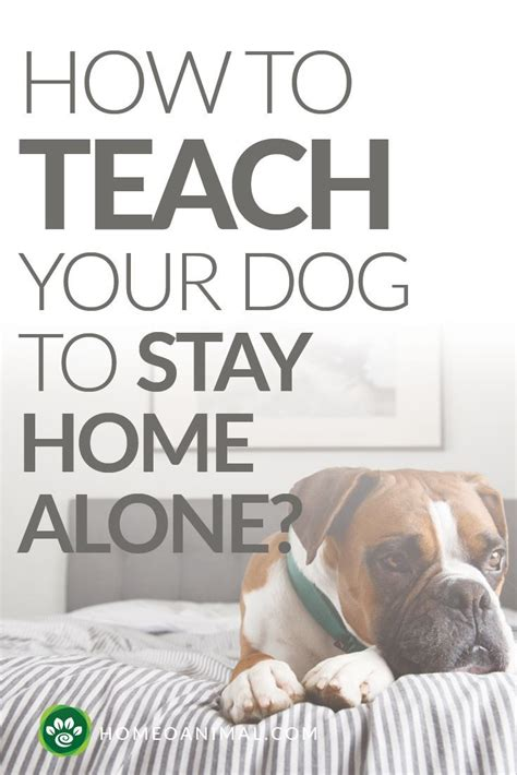 How To Teach Your To Stay The by How To Teach Your To Stay Home Alone Home Alone A