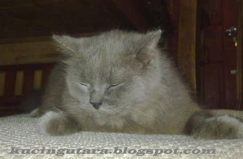 Vitamin Kucing kucing utara keperluan multivitamin kucing