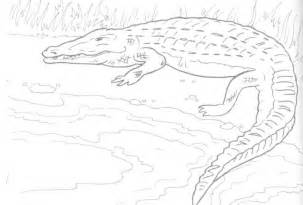 Free Printable Crocodile Coloring Pages For Kids sketch template