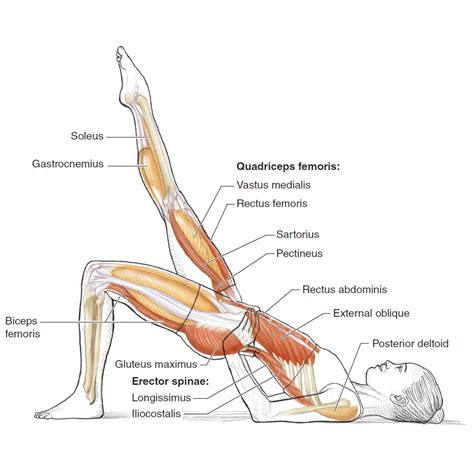 pilates anatomy pilates anatomy rael isacowitz karen clippinger 9780736083867 amazon com books