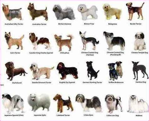 breeds with images small breed dogs pictures photos pics images gallery breed breeds picture
