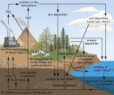 sulfur cycle | ecology | britannica.com