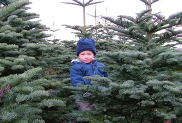 choose your own christmas tree in and around london my