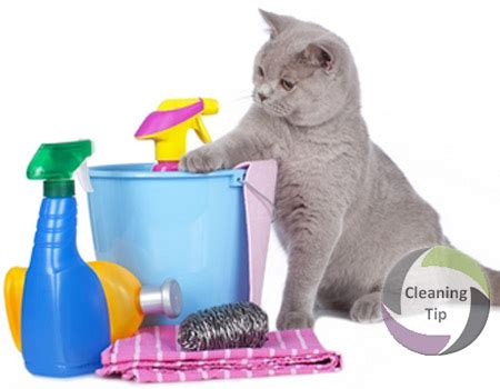 how to clean up how to clean up after cats by trade