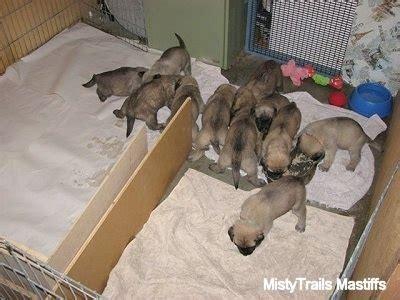 when do puppies start puppy food when do newborn puppies start food food ideas