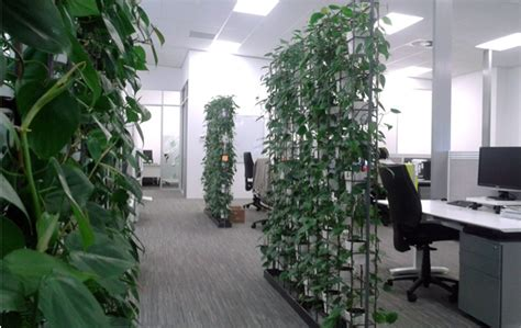 interior plant wall the garden auckland s indoor plant hire specialists
