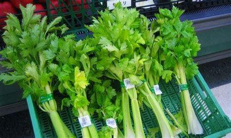membuat jus sayur seledri  terapi berbagai penyakit