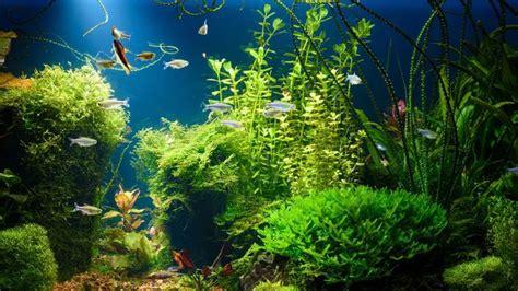 jenis tanaman aquascape    mudah dirawat