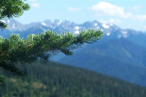 pacific northwest design royalty free stock photo image pacific northwest mountains royalty free stock images