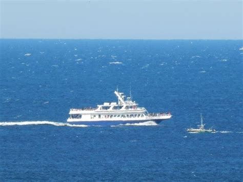 provincetown shuttle boat cape cod whale watching what you need to know before you go