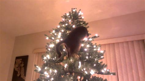 cat christmas tree disaster youtube