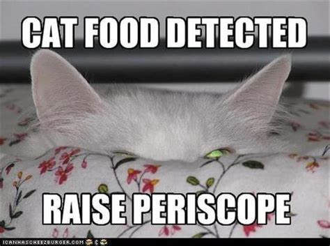 Cat Food Meme - funny cat cat food detected