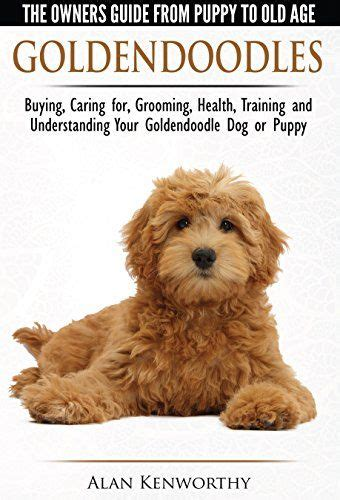 goldendoodle puppy care tips best 25 goldendoodle grooming ideas on puppy