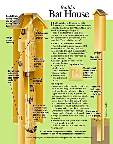 fun family project how to build a bat house bats