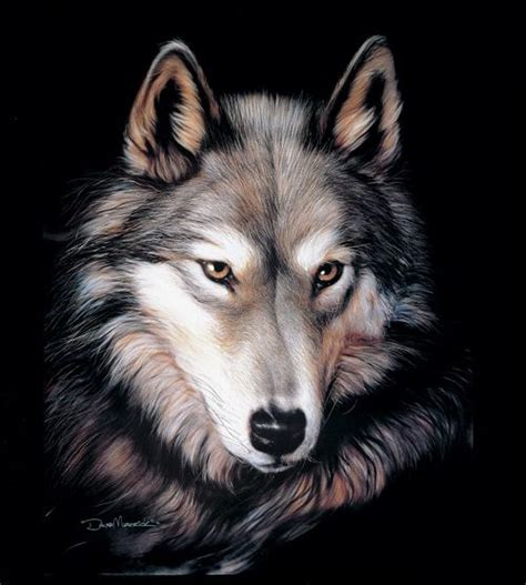 Buy A Used Wolf Or   23 best images about wolf and dog mink blankets wholesale on pinterest wolves the den and mink