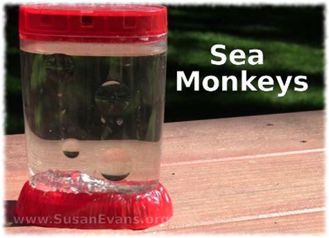sea monkeys susan's homeschool blog susan's homeschool blog