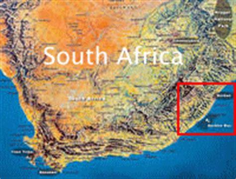 see the sardine run shark feeding frenzy south africa