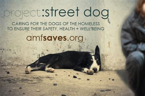 Morceguinho Homeless Wanna Adopt Him From The You Are A Photo Pool You Are A by Project Helping The Dogs Of The Homeless