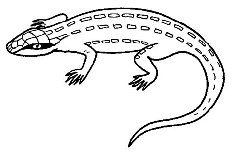 coloring page of a lizard animal lizard coloring sheet for print