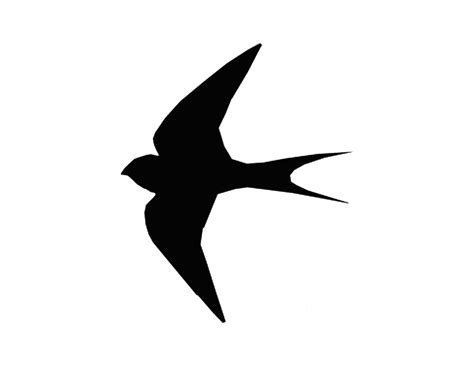 best photos of flying bird stencil flying bird stencil