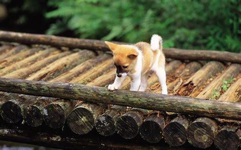 Garden Dogs Pretty Dogs In Garden Dogs Wallpaper 13906009 Fanpop