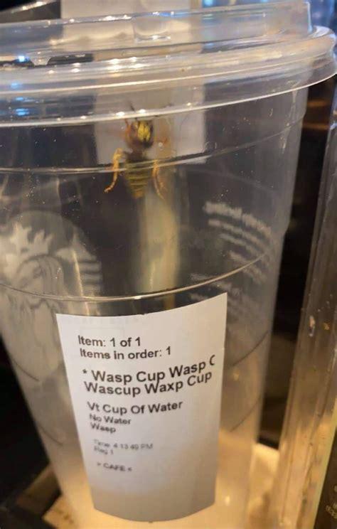wasp cup memebase funny memes