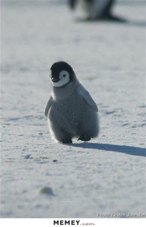 Cute Penguin Meme - penguin memes funny penguin pictures memey com