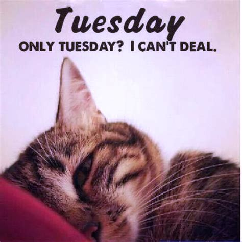 Tuesday Funny Memes - funny tuesday quotes quotesgram