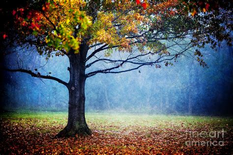 Nature S Generosity Photograph By Katya Horner