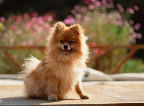 dog breeds    longest iheartdogscom